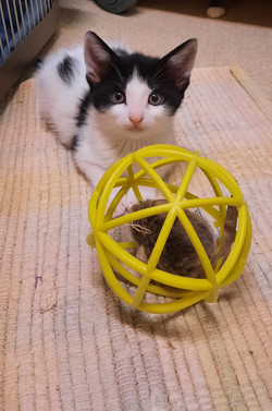 Kitten Dalice - adopted 10/10/21
