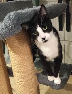 Felix - adopted Mar 2018