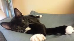 Eloise - adopted