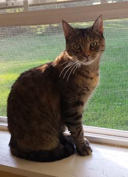 Yvette - adopted Nov 2020