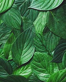 greenleaf2.png