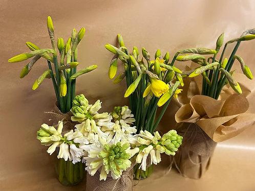 Daffodil Hessian Jar