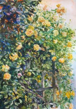 薔薇のある庭