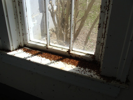 Those are lady bugs!