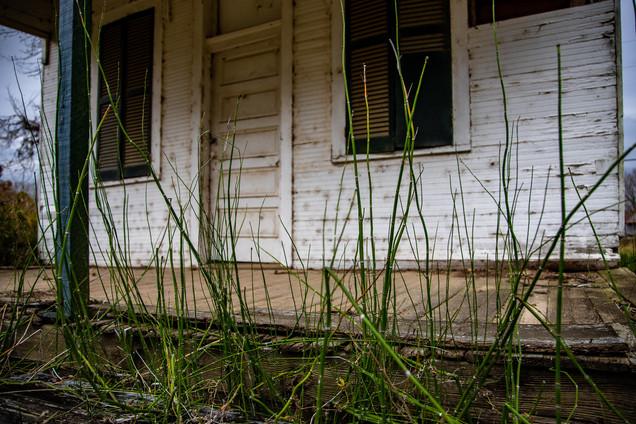 Sugar cane growing along the porch.