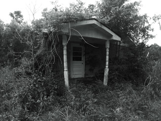 Home in the Swamps