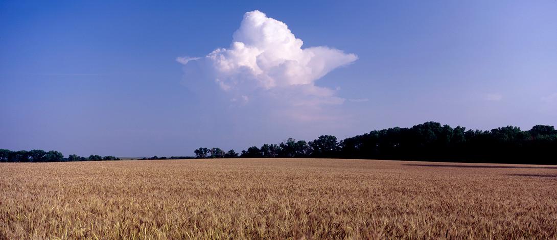 A Forming Thunderhead