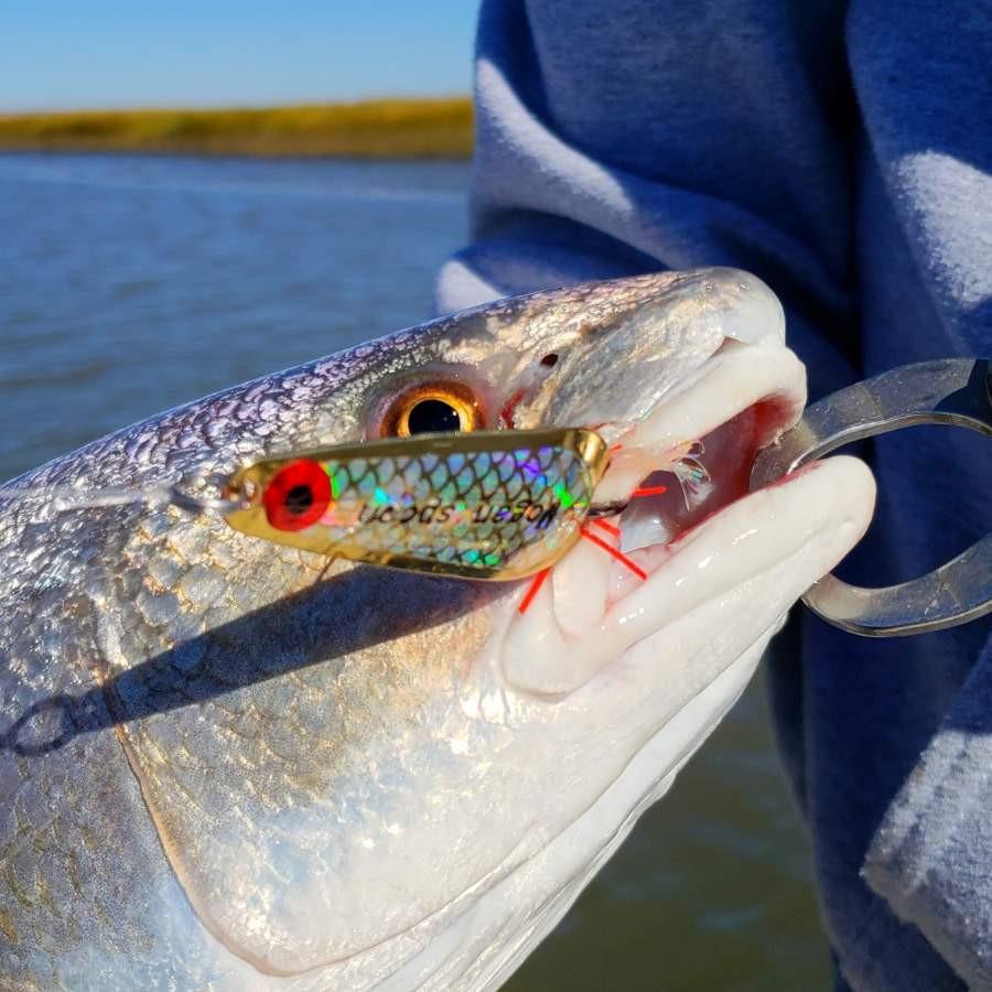 Redfish on a Trokar Mogan Spoon