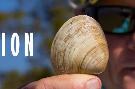 IRL Clam Project Update