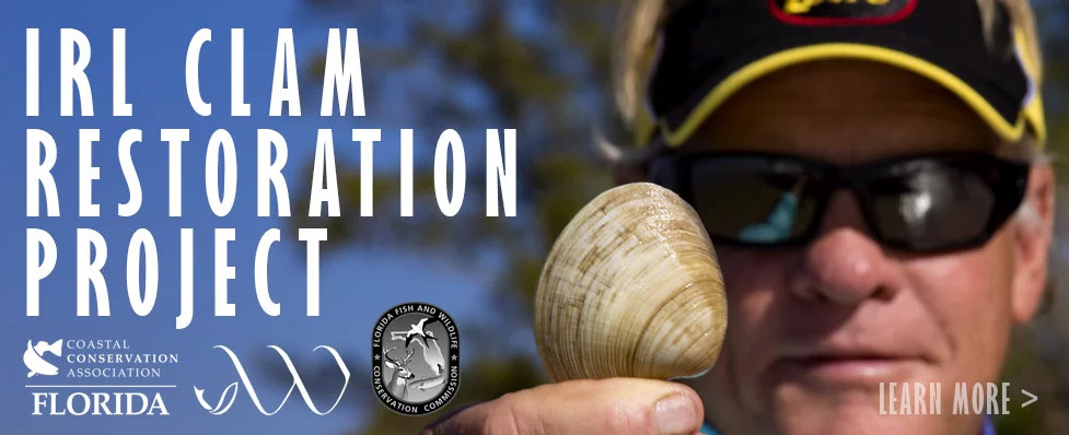 IRL Clam Restoration Project with CCA Florida
