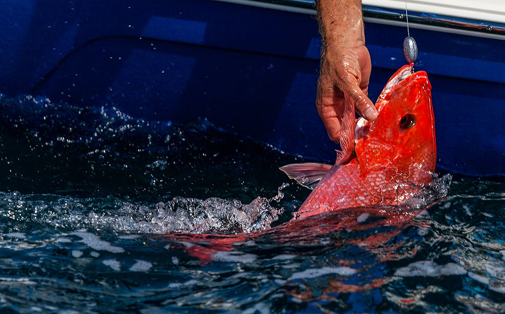 Red Snapper Fishing on Florida's Space Coast