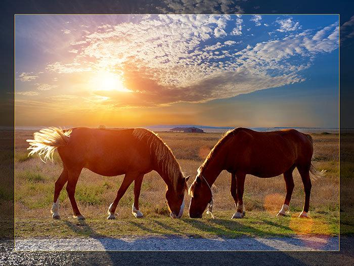 3'x4' Vinyl Banner - 2 Horses