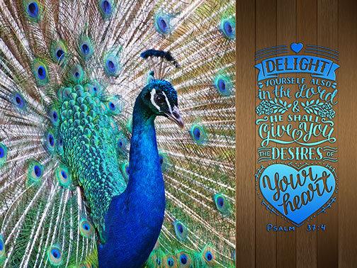 Outdoor 3'x4' Vinyl Banner - Peacock with Scripture - Psalm 37:4
