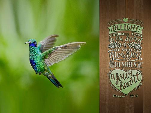 Outdoor 3'x4' Vinyl Banner - Humming Bird with Scripture - Psalm 37:4
