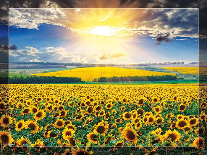 3'x4' Vinyl Banner - Sunflowers