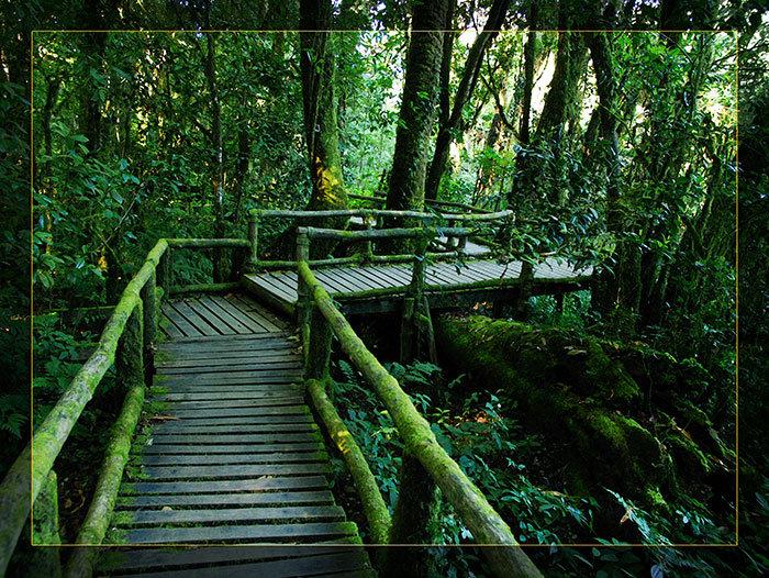 3'x4' Vinyl Banner - Rain Forest Bridge