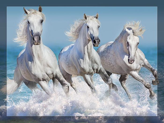 3'x4' Vinyl Banner - White Horses