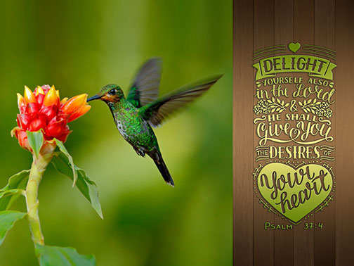 Outdoor 3'x4' Vinyl Banner - Humming Bird Feeding from Red Flower with Scripture