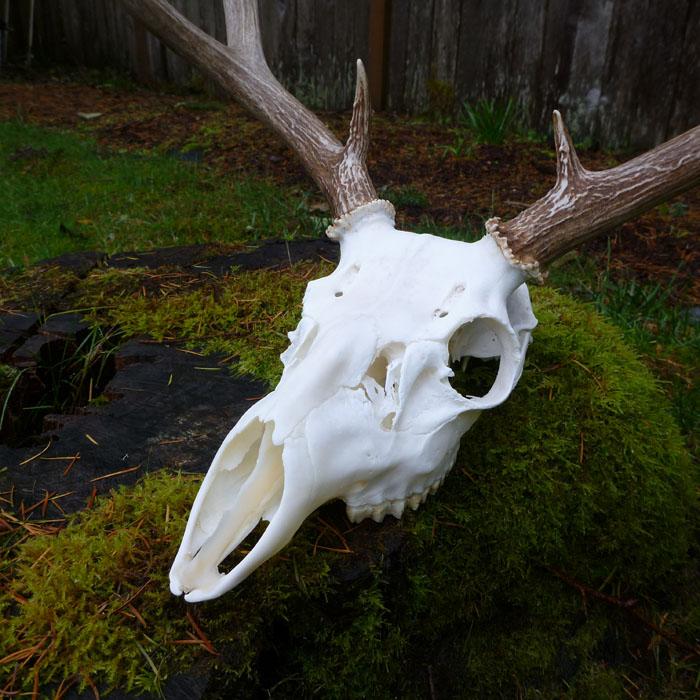 skully1
