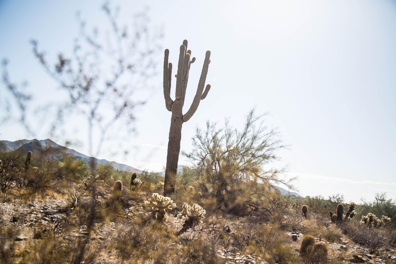 Sonoran Preserve, Ariz.