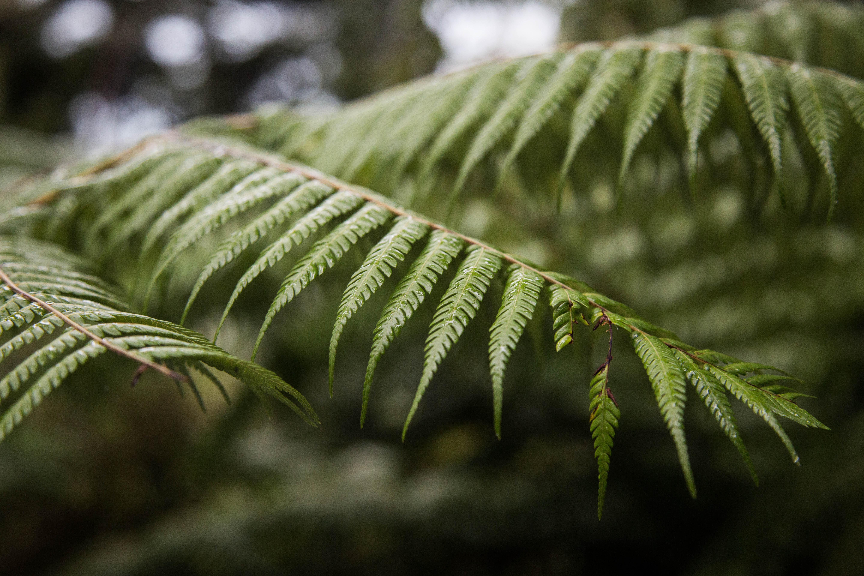 Abel Tasman Ntl. Park, New Zealand