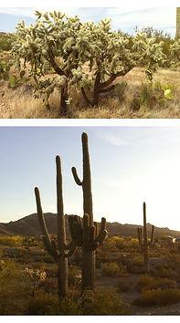 Voilà! About Maria Gagnon - Professional Organizer Penticton - Organizing Services - Travel Arizona 2014