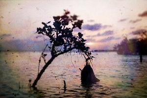 海岸印象-400-21.jpg