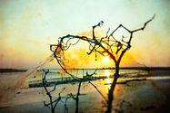 海岸印象-400-20.jpg