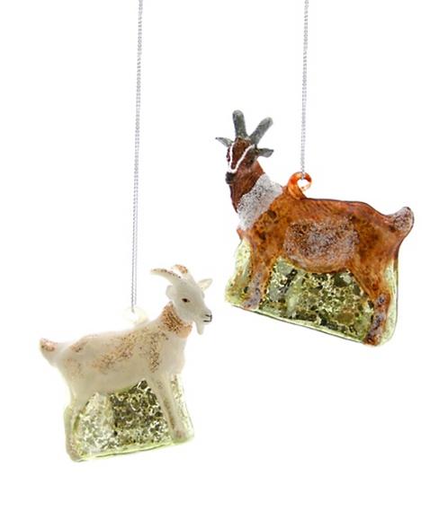 Farmstead Goat, Brown
