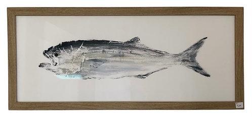 Framed Fish Print, Left Facing