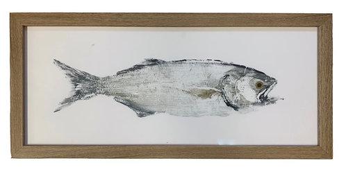 Framed Fish Print, Right Facing