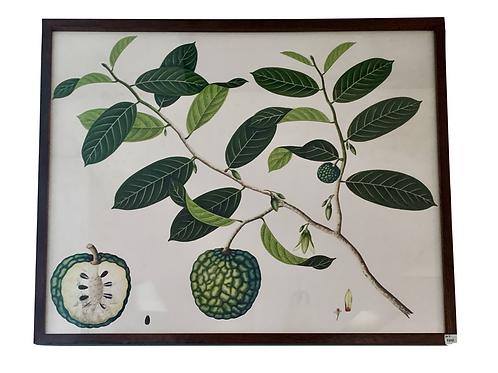 Botanical Fruit