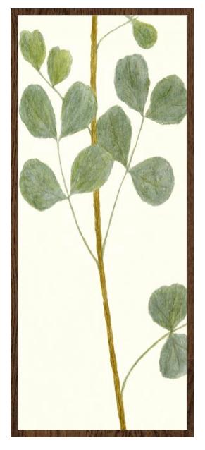 Eucalyptus Print, Framed