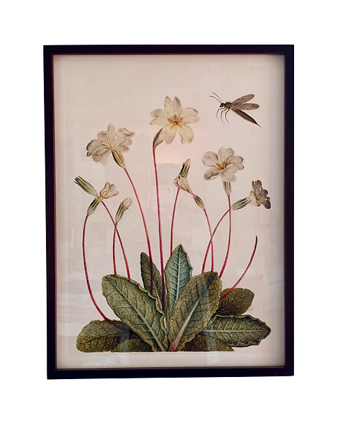 Botanical Dragonfly