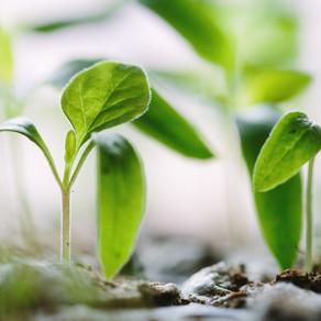 En temps de crise, nourrir les graines qui nous nourriront