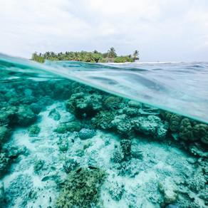 Bienvenue sur le Récif de MarAdentro