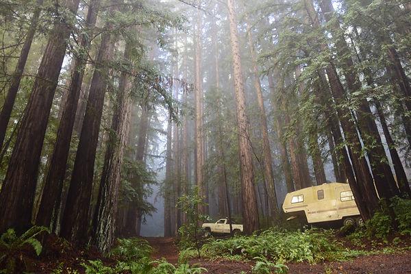 Redwoods di Santa Cruz, California.JPG