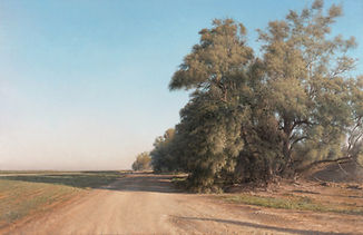 Blushed-Tamarisks-Treetops_-2011-2012-oil-ion-canvas-mounted-on-wood-100x155-2.jpg