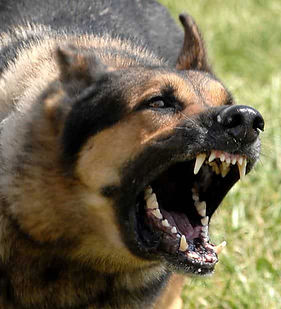 attack-dangerous-dog-use-deadly-force.jp