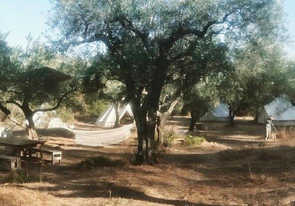 MOO tents
