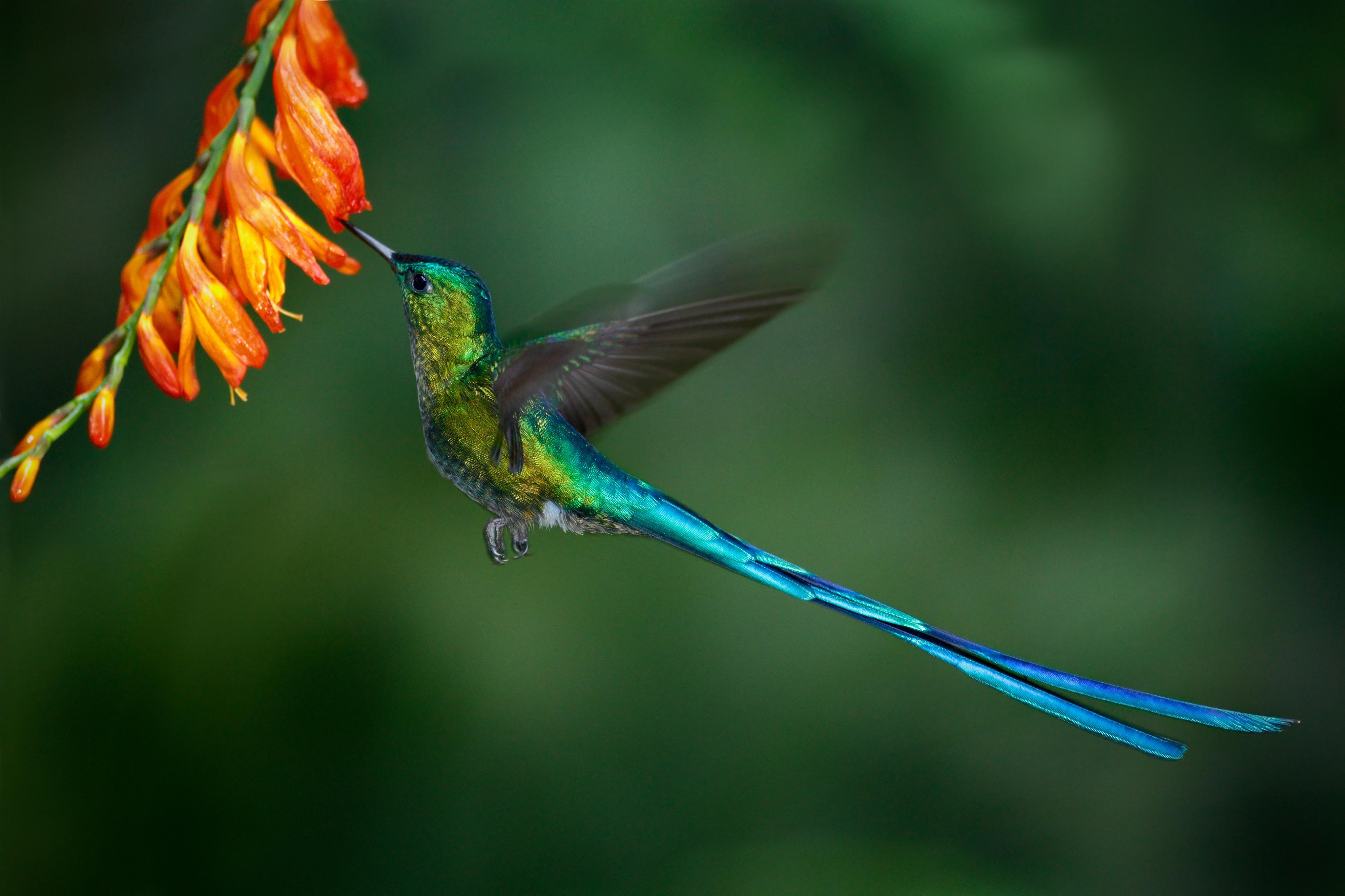 Rich Biodiversity
