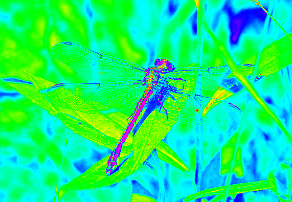 clubtail  __068.png