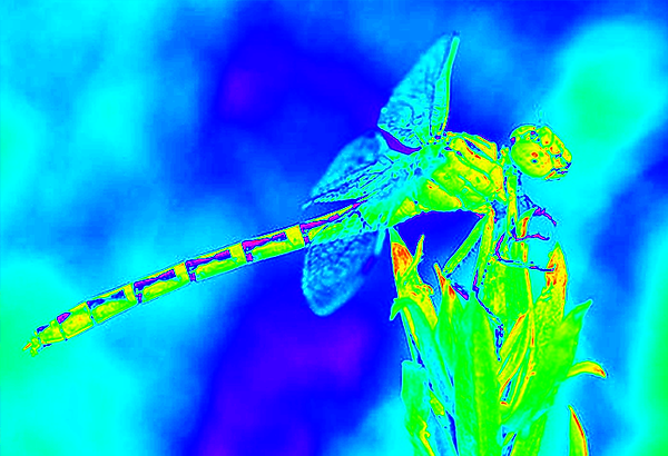 clubtail  __053.png