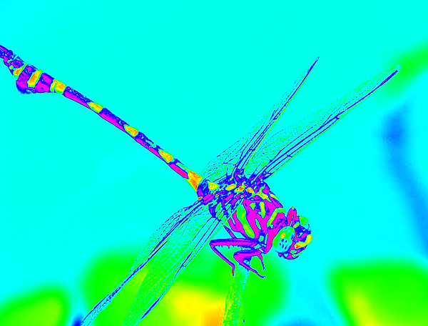 clubtail __010.png