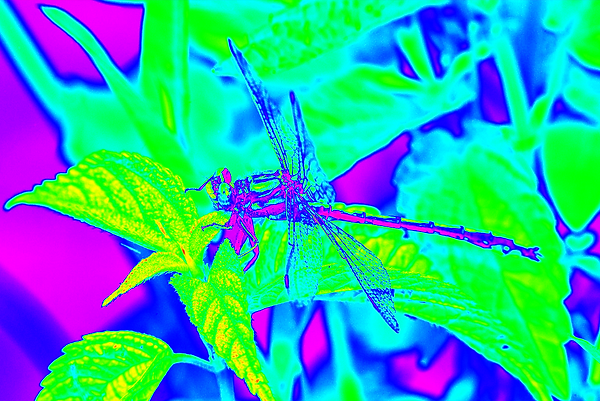 clubtail  __047.png