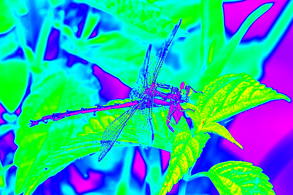 clubtail  __035.png