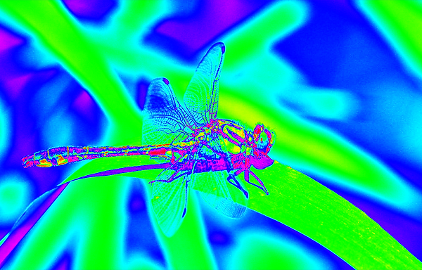 clubtail  __019.png