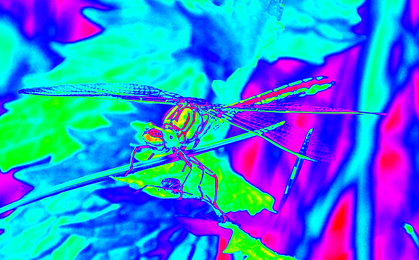 clubtail  __041.png