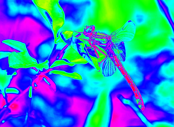 clubtail __007.png
