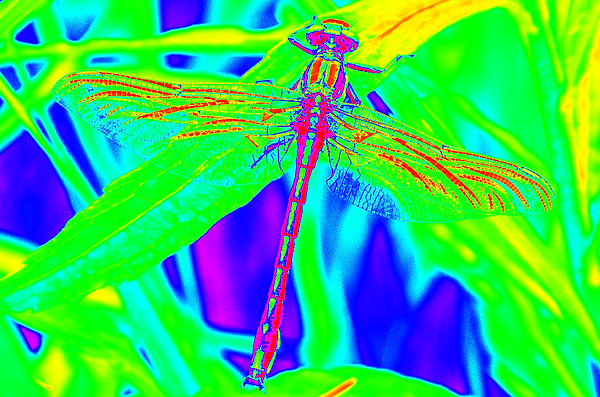 clubtail  __083.png